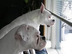 white-boxers